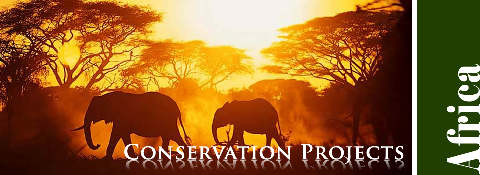 Conservation Projects in Africa