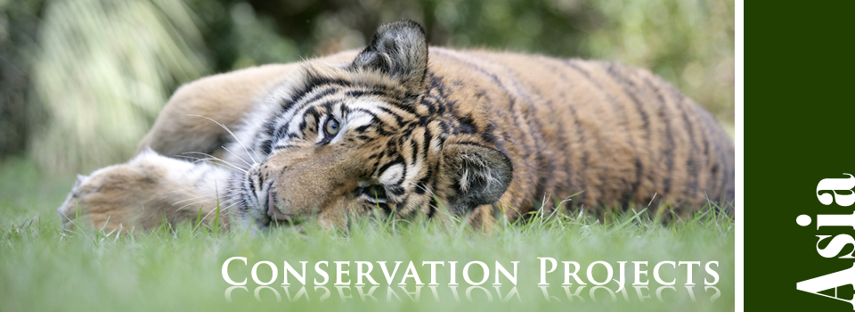 Conservation Projects in Asia