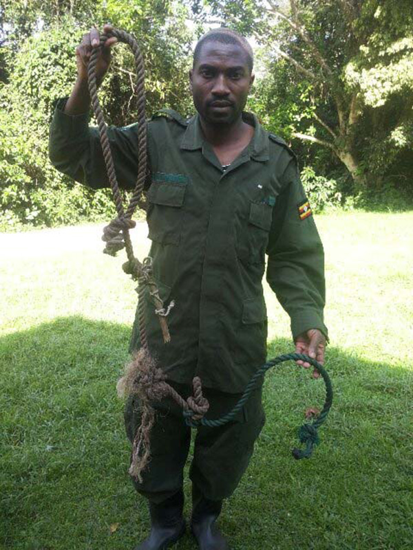 UWA ranger shows large animal snare removed from the Kibale forest, aided by equipment provided by the RSF.