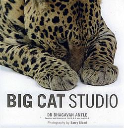 Big Cat Studio Book