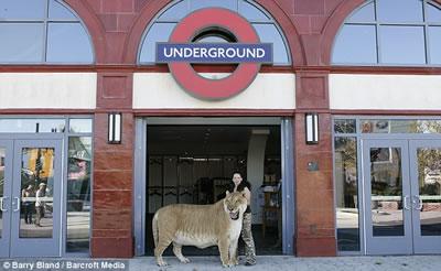 Liger in front of Underground