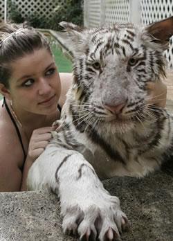 Tawny and tiger