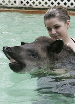 Tawny and Tapir