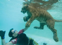 Rajani and tiger swimming