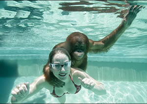 Orangutan and Moksha swimming
