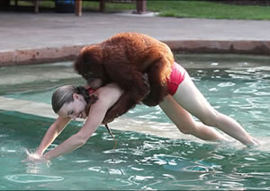Last one in's a chimp: Suryia, a seven-year-old urangutan, has taken a shine to diving into a pool with bikini-clad trainer Moksha Bybee at at Myrtle Beach Safari in South Carolina