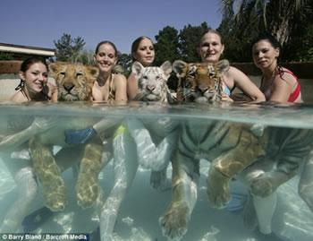 Animal Trainers