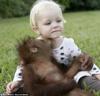 Kiss orangutan