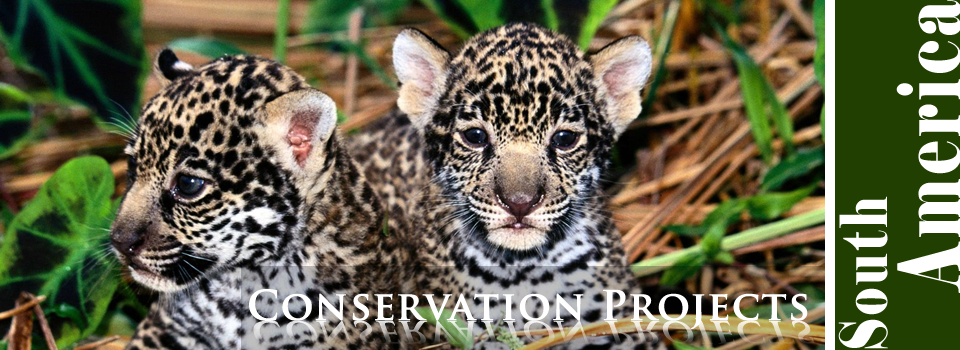 Conservation Projects in South America